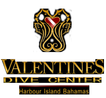 Valentines Dive Center - Harbour Island Bahamas